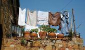 Chats - trouver des plantes de balcon non toxiques
