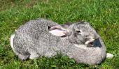 Que mangent les lapins préfèrent - afin de gérer l'alimentation saine