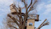 Comment puis-je construire une maison dans les arbres?  - Un manuel de construction