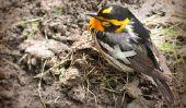 Vogel mal - que faire avec des oiseaux sauvages?