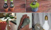 Ampoule Planteur Lumière bricolage