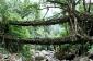 Les racines de vie Ponts de Cherrapunjee, Inde