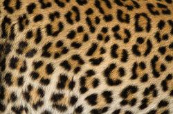 Oreilles Leopard tinker - donc réussir le panneau