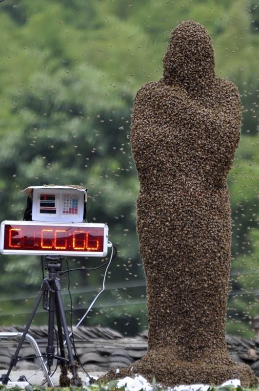 â € ~Bee-Attractingâ € ™ concurrence à Shaoyang, Chine