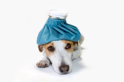 Votre chien vomit?  - Comment pouvez-vous l'aider