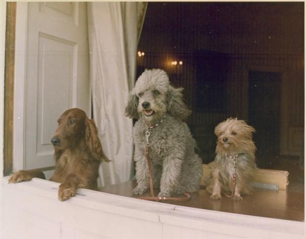 15 chiens les plus célèbres de l'histoire - de Bo à Lassie!