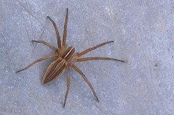 Combien d'espèces d'araignées sont là dans le monde entier?  - Vue d'ensemble