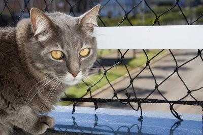 Fixez chat net sur le balcon sans perçage