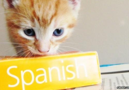 Des petits trucs pour apprendre une nouvelle langue que personne ne vous enseigne à l'école
