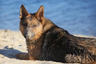 Lacs pour les chiens en NRW - qui sont appropriées pour les lacs