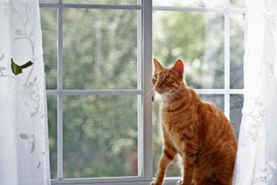 Construire barreaux de la fenêtre pour les chats eux-mêmes