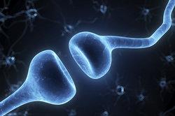 Cellules sensorielles primaires et secondaires