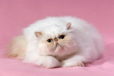 Enlever les poils de chat de vêtements - sans Fusselrolle Il est si