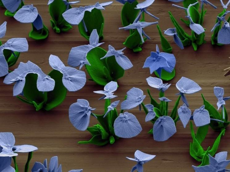Chercheur cultive des fleurs microscopiques par cristallisation Contrôle