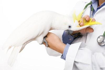 Demande de stage vétérinaire - donc impressionner avec expérience