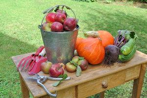 Une alimentation saine à l'automne - informatif