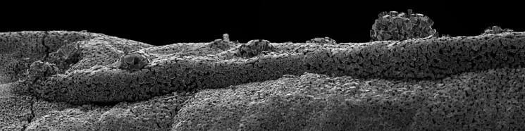 Paysages du monde du nano par Michael Oliveri