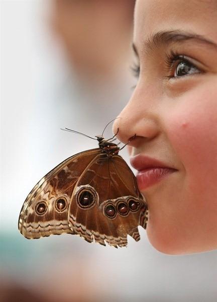 Exposition tropicaux Papillons à Londres