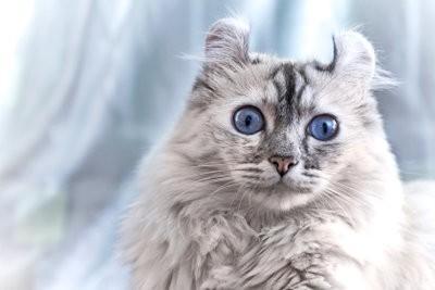 Stress bulle - de sorte que vous aider votre chat avec des signes