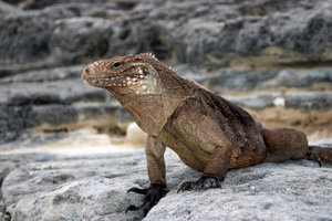 Comme la respiration reptiles?  - Une explication simple