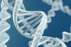 Gene duplication - informatif