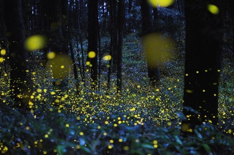 Superbes Longue exposition Photos de l'or Fireflies