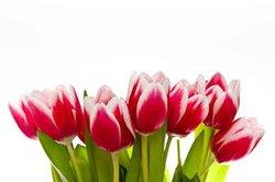Commandez des fleurs - si vous envoyez un bouquet sur Internet