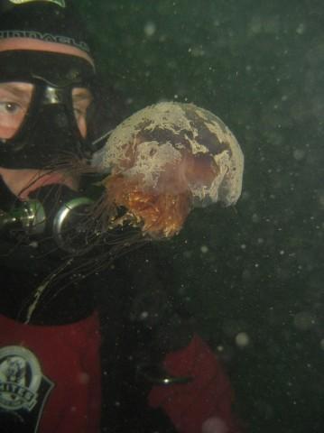 Apprendre à connaître A- biologiste marin!
