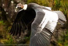 Top 10 des plus grandes et les plus lourdes oiseaux vivants dans le monde