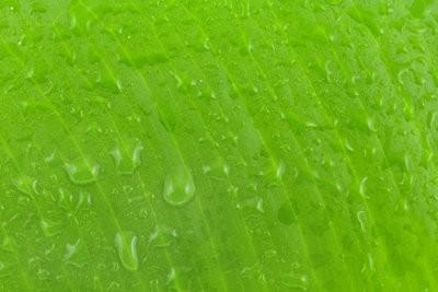 Des plantes vertes dans la chambre à coucher - vous devriez noter