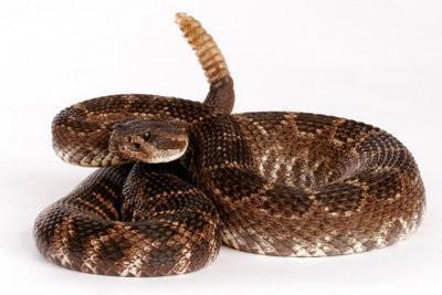 Gardez serpents venimeux en Allemagne - que vous devez prendre en considération