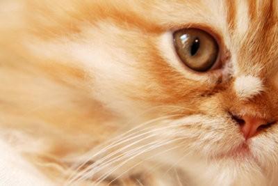 Les chats se housebroken - Comment enseigner à votre chat