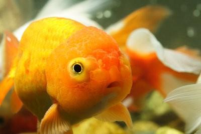 Faire des aliments pour poissons se