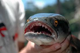 Top 10 des Créatures de la mer les plus dangereux