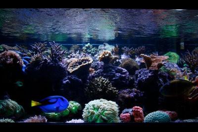 Construire le mur arrière de l'aquarium lui-même