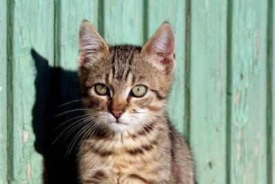 Les chats utilisent pulvérisation de défense correctement - afin que le chat reste loin
