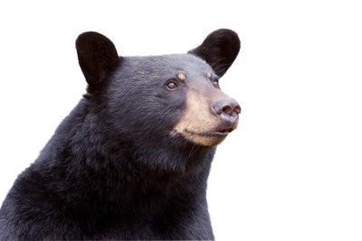 Make-up ours - de sorte qu'il est réaliste