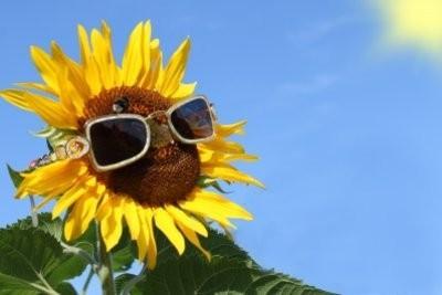 Enlever les rayures des lunettes de soleil - si vous perdez votre vue