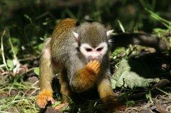 Acheter une maison singes - Avantages et inconvénients