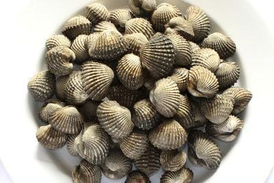 Les coquilles de la mer du Nord - Vue d'ensemble