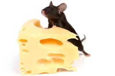 Que mangent les souris?  - Pour les nourrir avec humanité