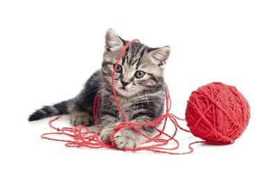 Avec chats jouant - les meilleures idées de jeu
