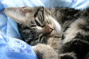 Whiskas Cat Cave - Critique