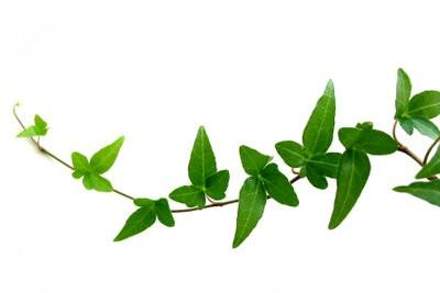 Plantes pour les salles obscures - de sorte que vous pouvez également écologisation espaces avec peu de lumière naturelle