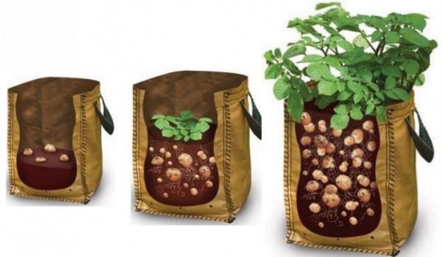 Comment Faire Pousser Des Pommes De Terre En Planteuse