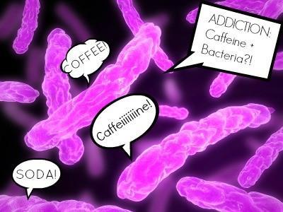 Est une bactérie Addicted to caféine ?!