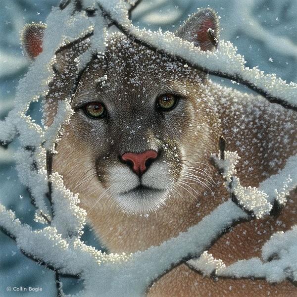 Peintures de faune réalistes par Collin Bogle