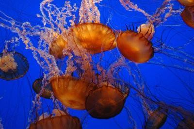 Jellyfish à Majorque - il vous faut payer