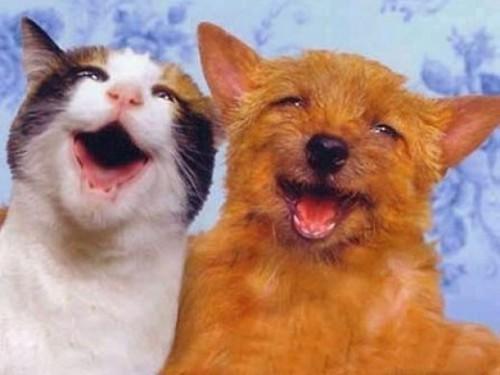 7 Moments d'une véritable coopération entre les chiens et chats