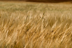 Déterminer le prix de la terre - comment cela fonctionne pour les terres agricoles